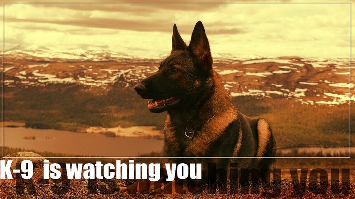 K-9 is watching you