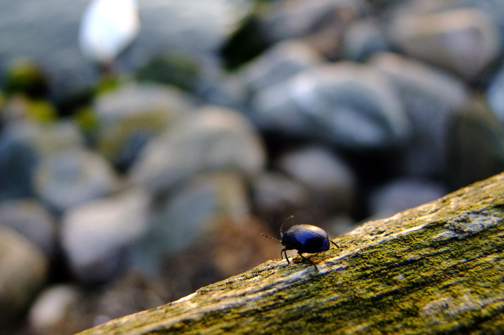 Käfer .........
