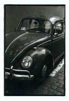 Käfer....