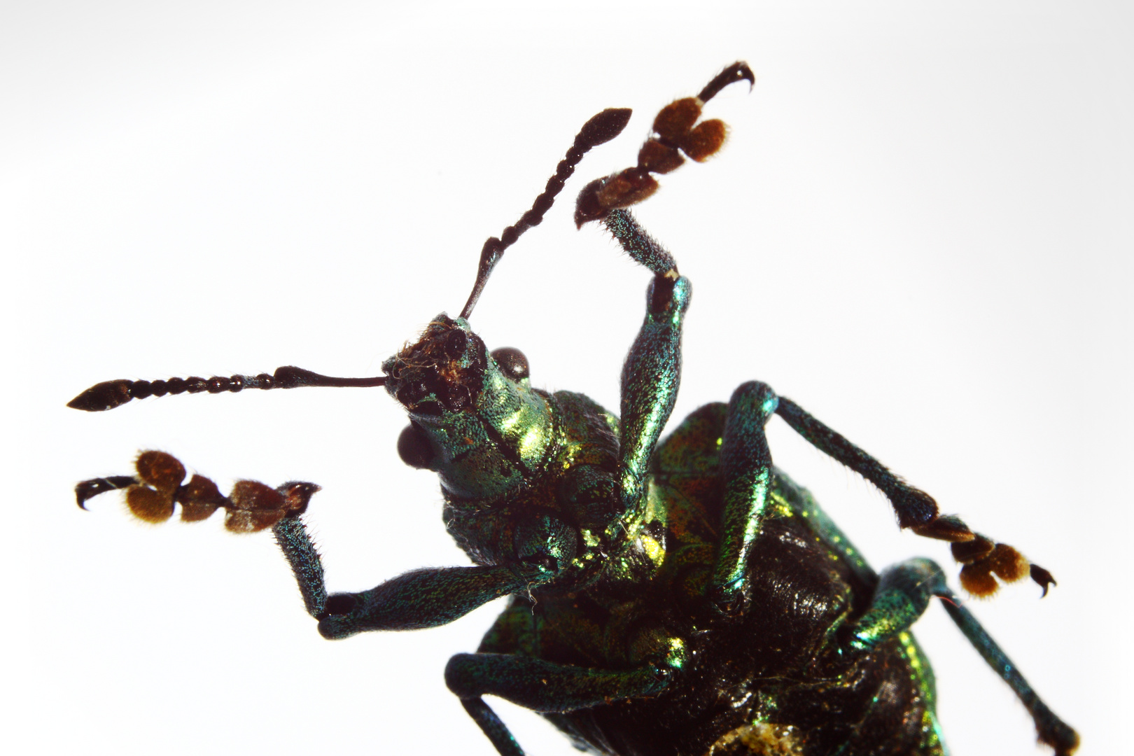 Käfer 3