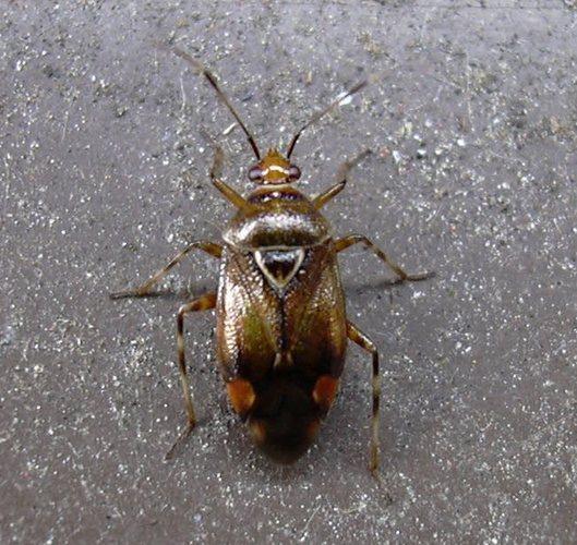 k fer 3mm gro foto bild tiere wildlife insekten bilder auf fotocommunity. Black Bedroom Furniture Sets. Home Design Ideas