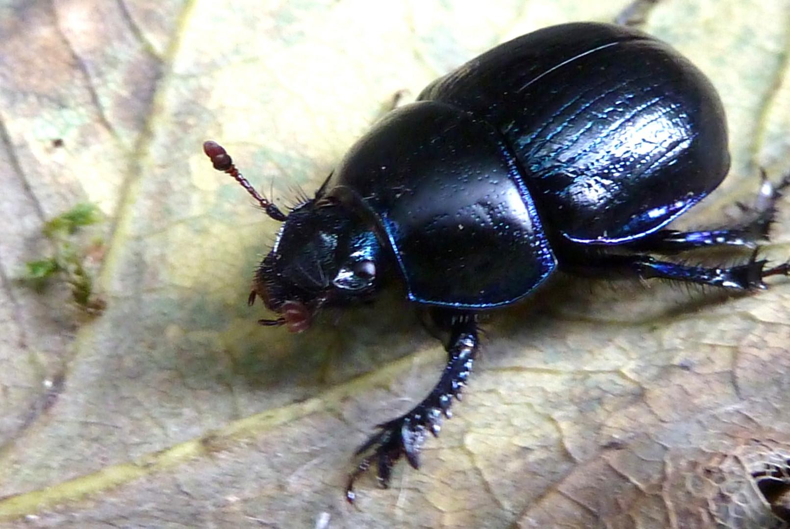 Käfer,,,