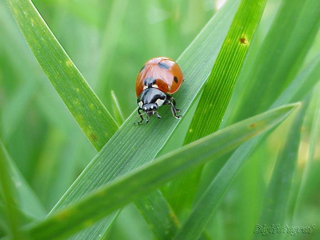 Käfer am Morgen