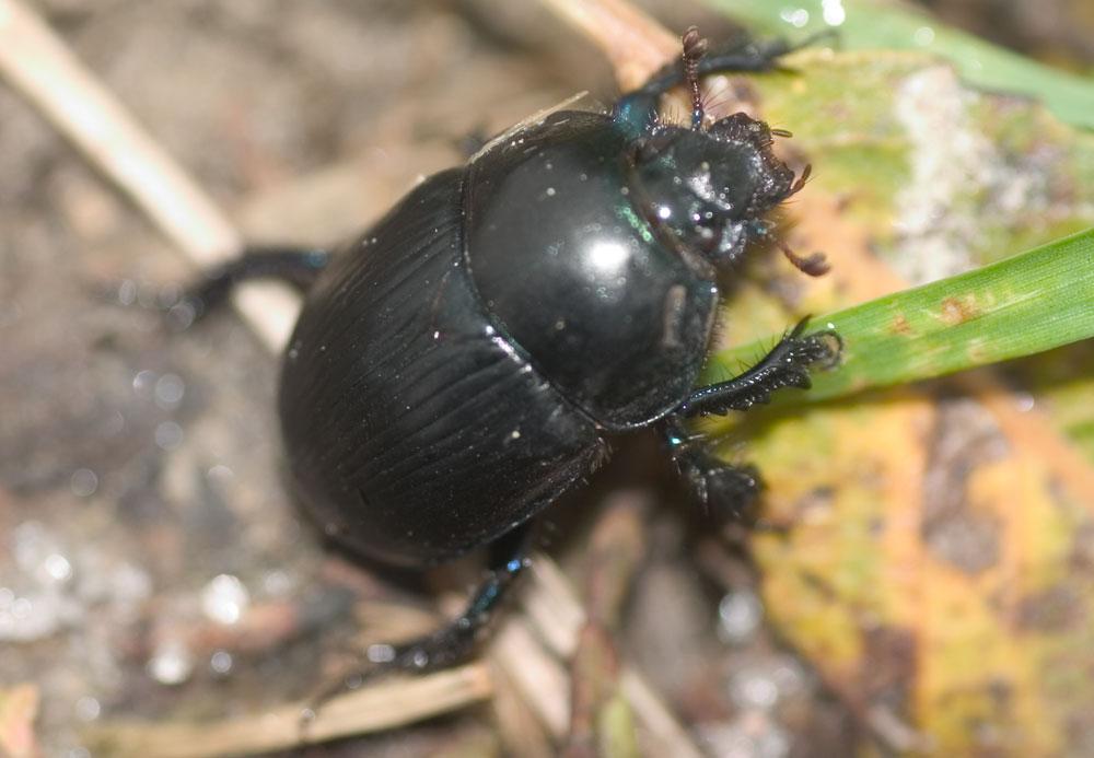 Käfer an Herbstlaub