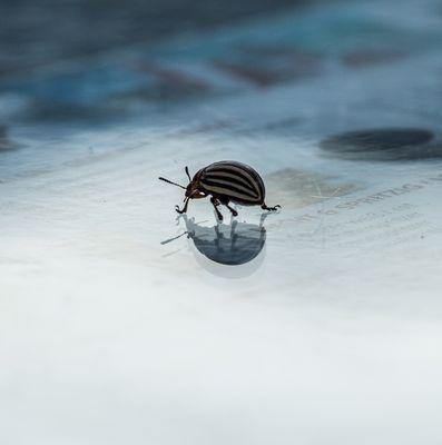 Käfer auf Abwegen-9100721