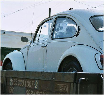 Käfer auf dem Güterwagen