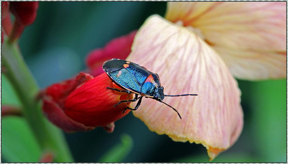 Käfer auf dem Hochsitz
