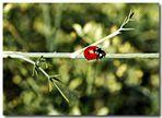 Käfer auf Fenchel