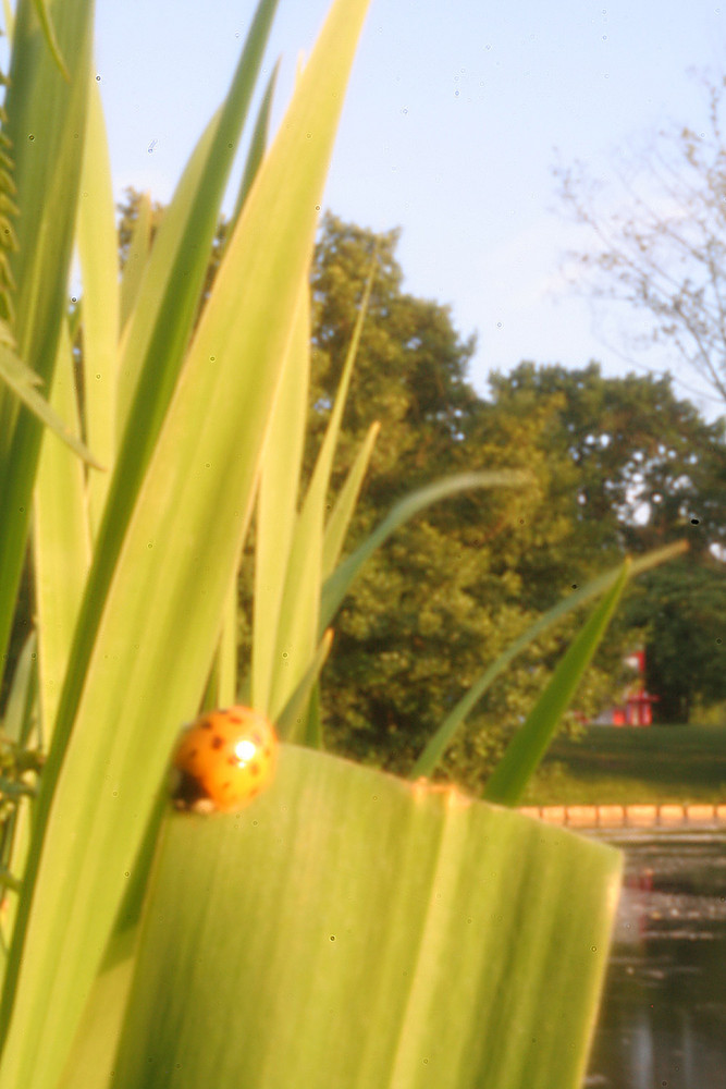 Käfer aufm Blatt