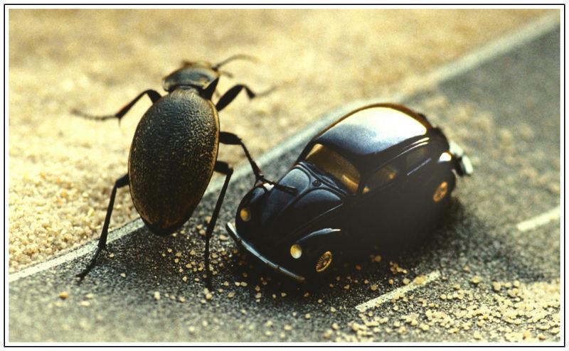 Käfer gegen Käfer