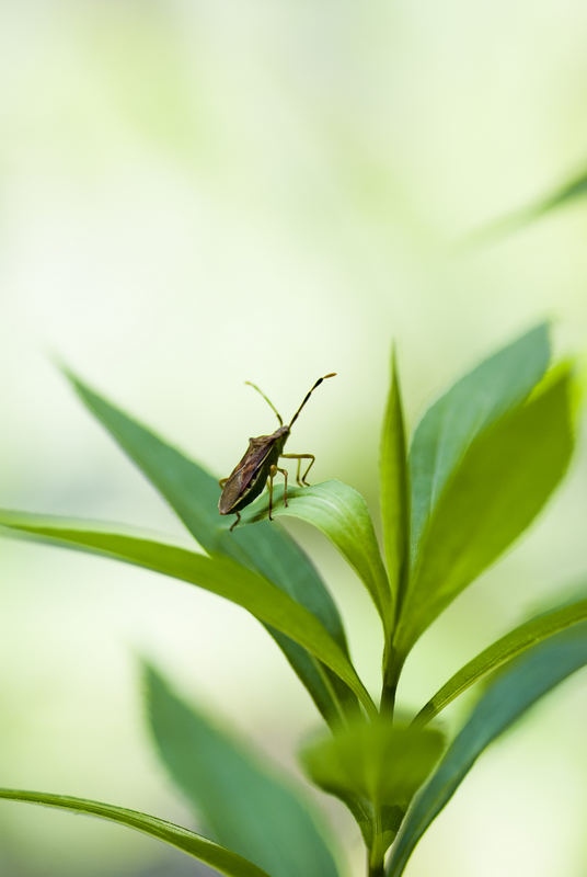 käfer haben kleine ohren