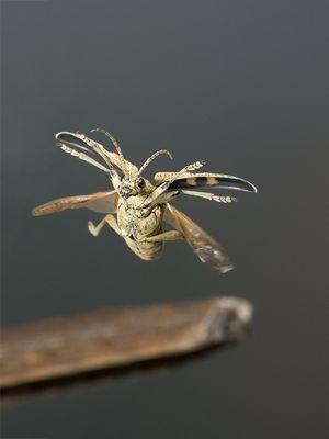 Käfer im Flug