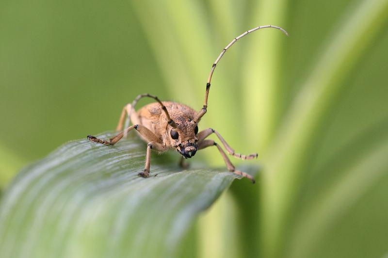 Käfer in Pose