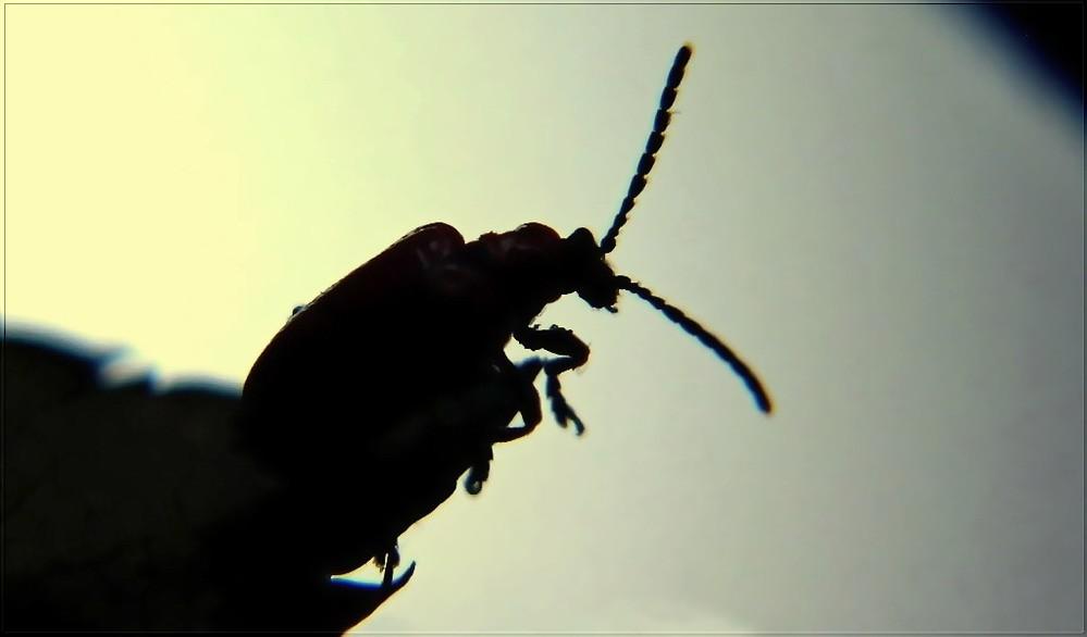 Käfer Karl sinniert über den Sinn des Daseins im Mondschein