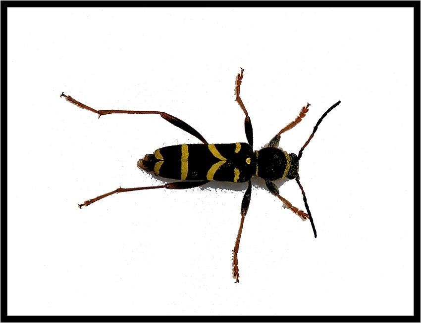Käfer mal etwas anders