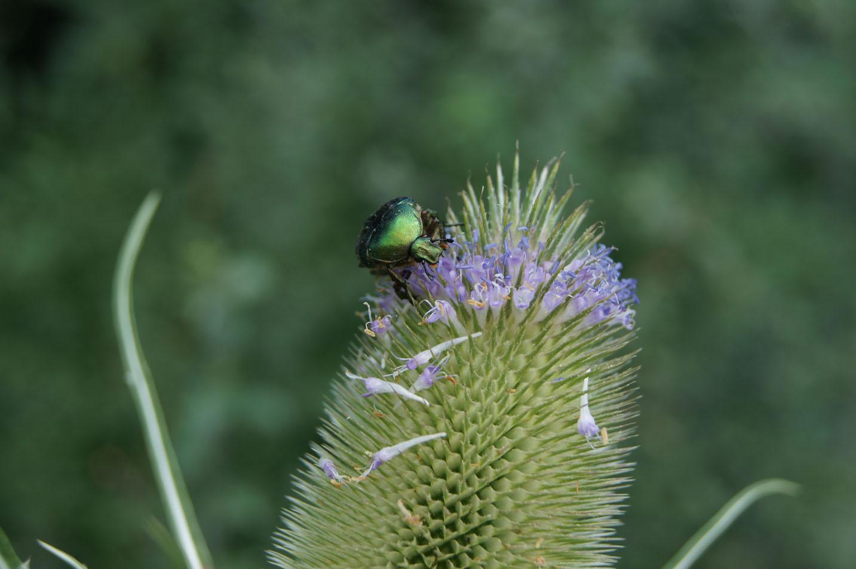 Käfer mit Arbeiten