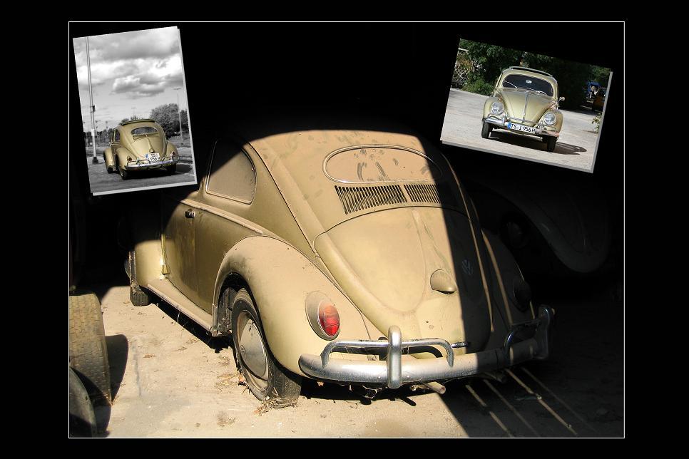 Käfer mit Rundum-Maniküre