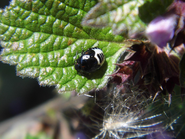 Käfer Name unbekannt