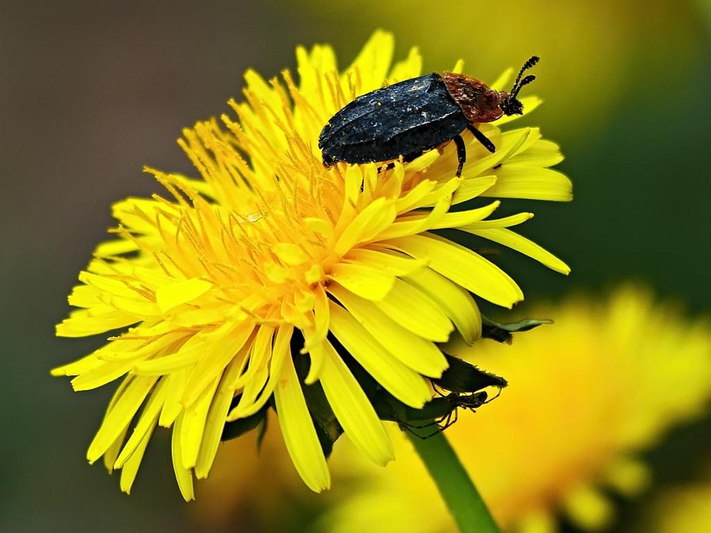 Käfer ohne Titel