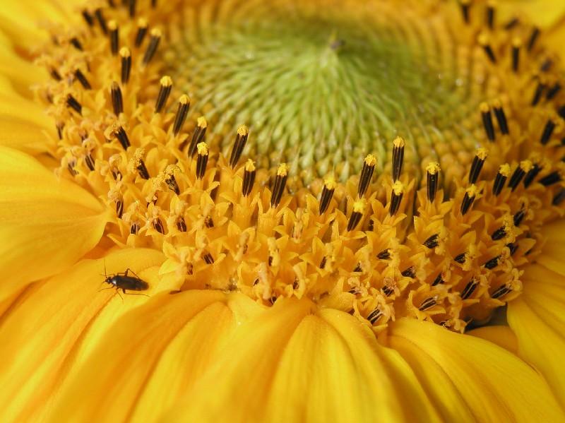 Käfer und Blume!
