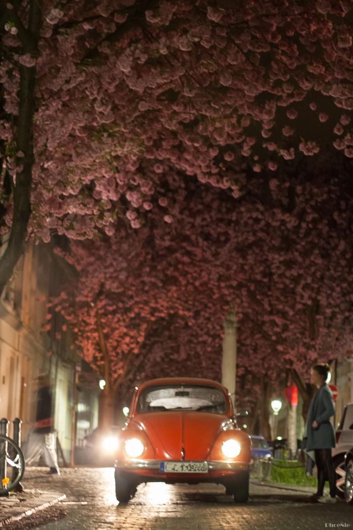Käfer unter den Blüten