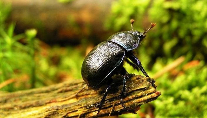 Käfer zeigt sich in voller Pracht