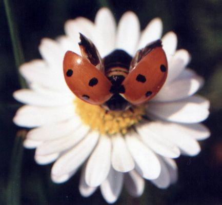Käfer zum Abflug bereit
