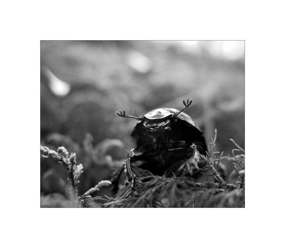käferattacke