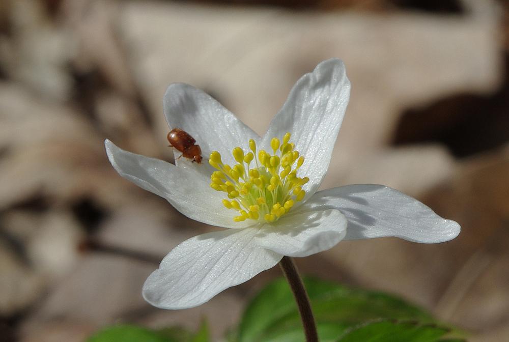 Käferchens Frühlingsfreude