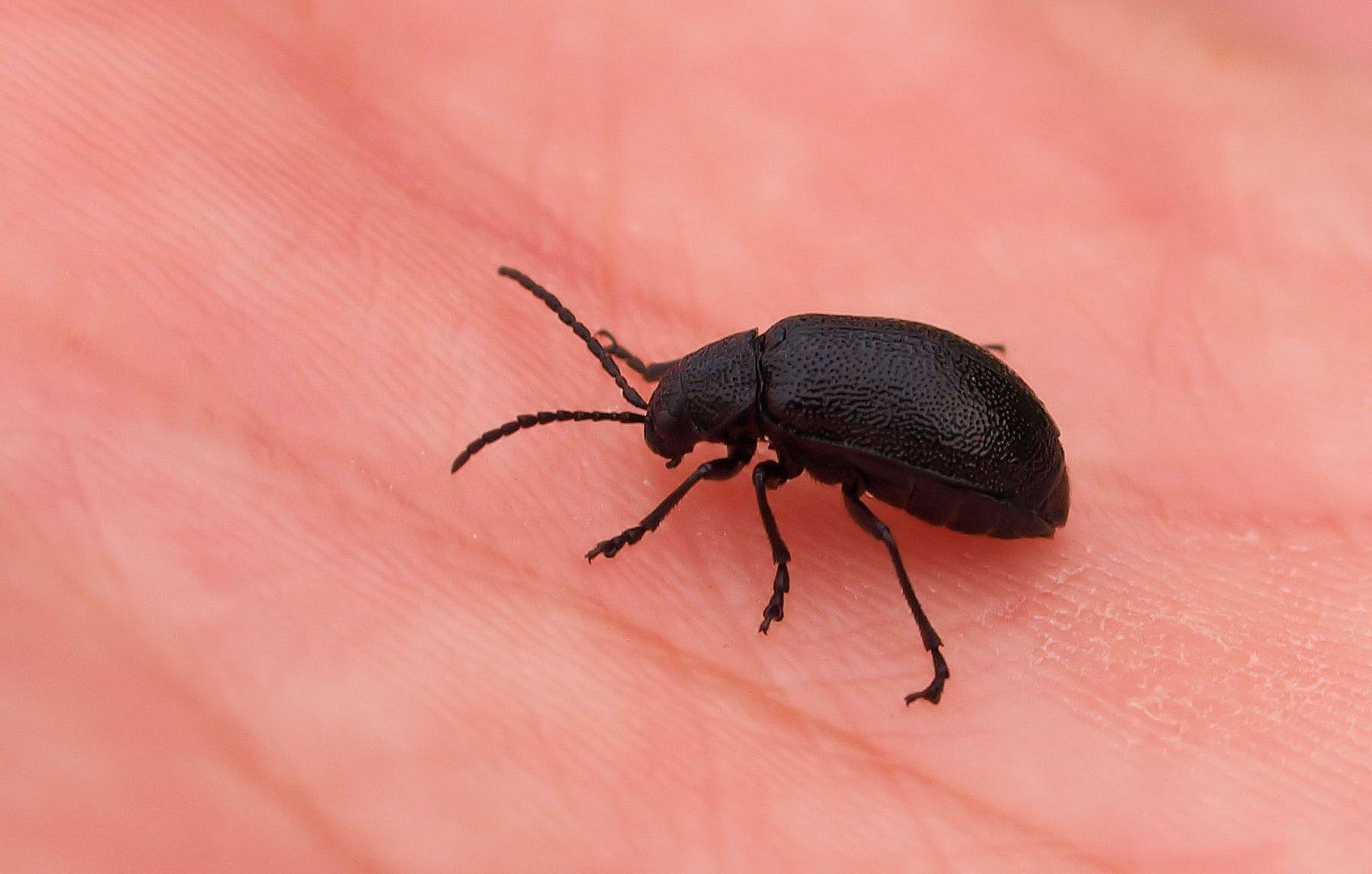 Käferfund