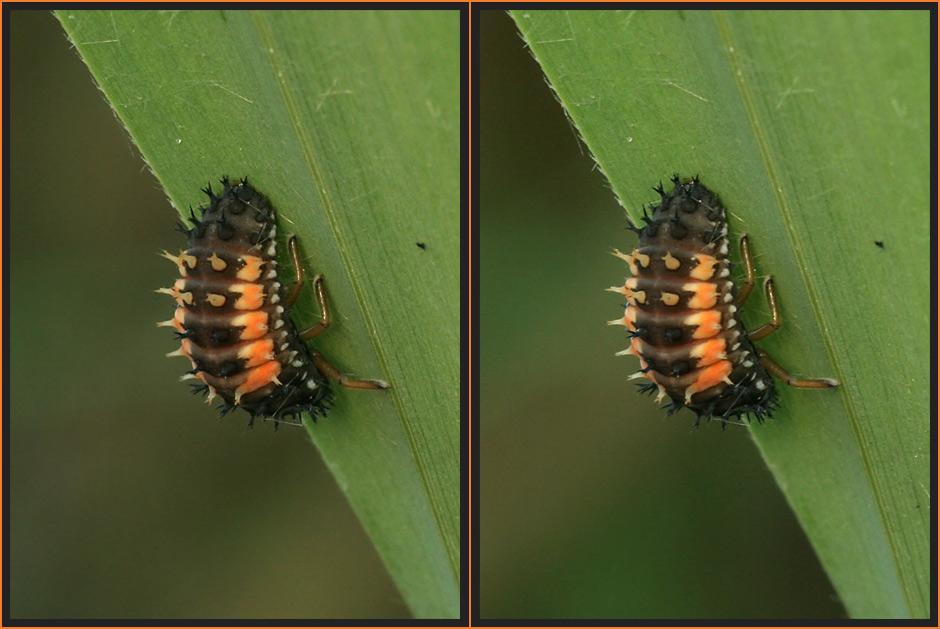 Käferlarve [3D]