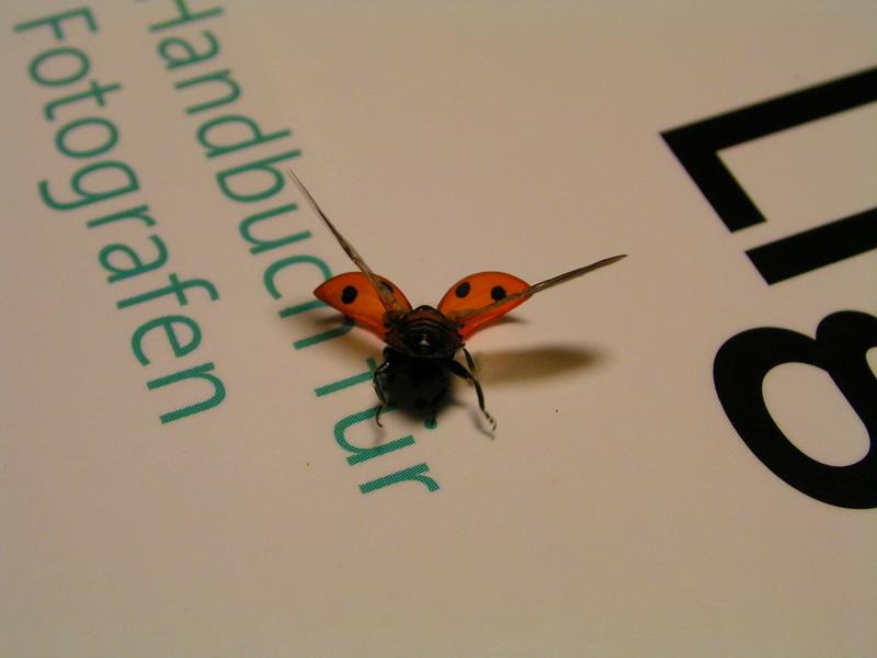 Käfermodell