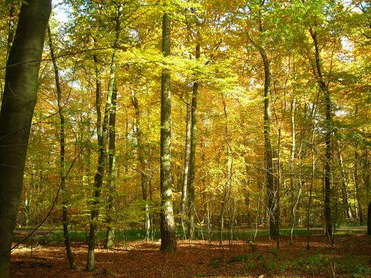 Käfertaler Wald im Herbst