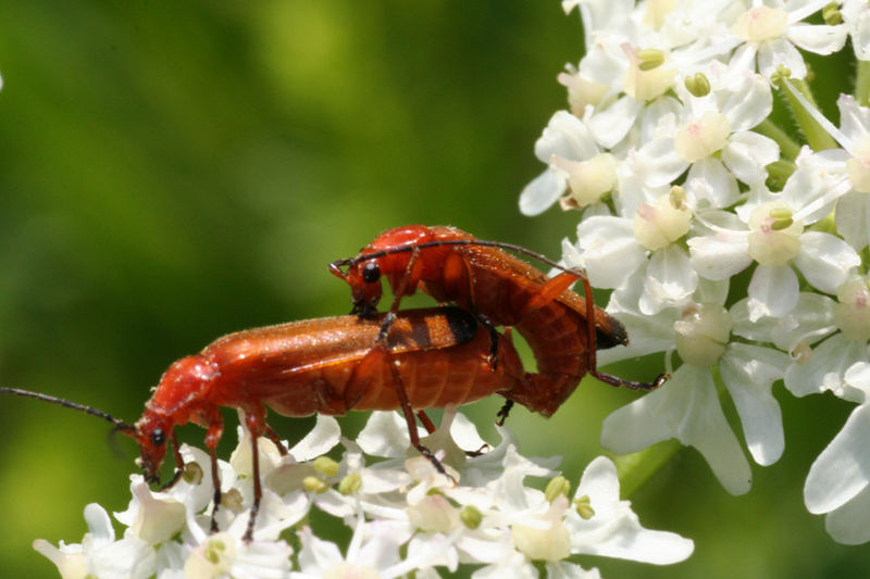 Käfervermehrung....