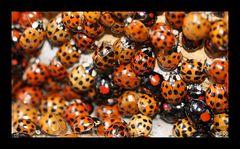 Käferversammlung