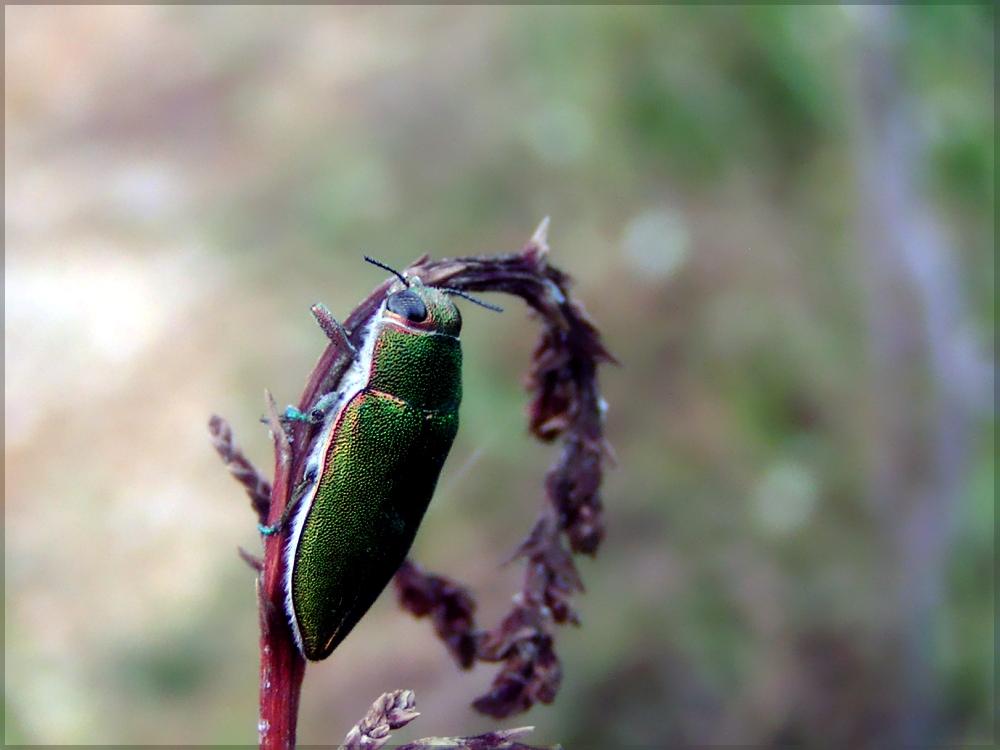 Käferzeit