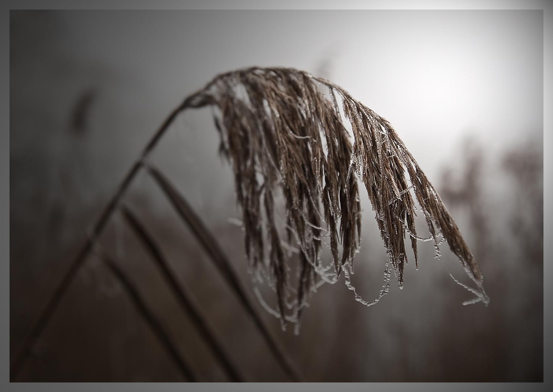 - Kälte -