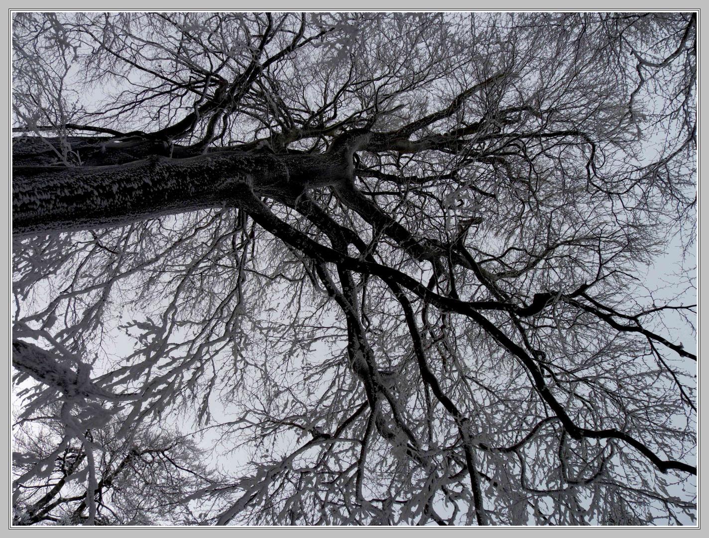 Kälte und Schnee reduzieren auf das Wesentliche