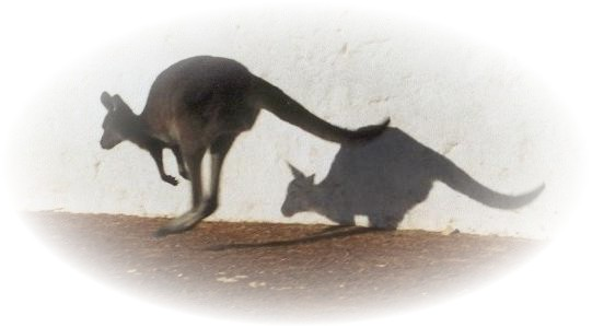 """Känguru """"auf der Flucht"""" II"""
