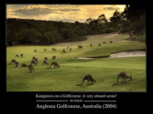 Känguruhs auf dem Golfplatz in Australien