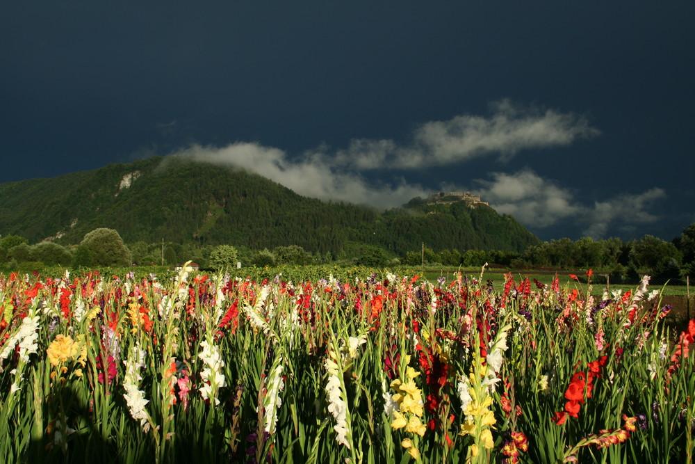 Kärnten: Nach dem Gewitter