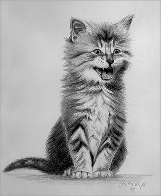 Kätzchen - Bleistiftzeichnung