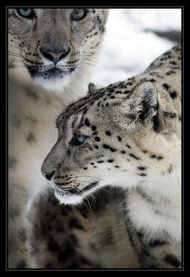Kätzchen im Schnee