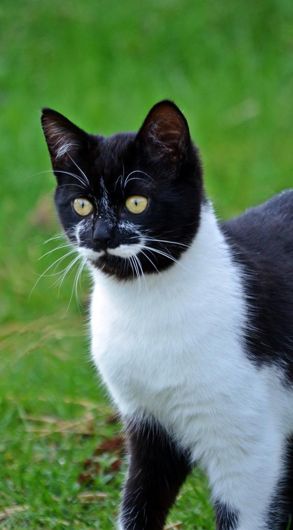 Kätzchen mit Schnurrbart :-)