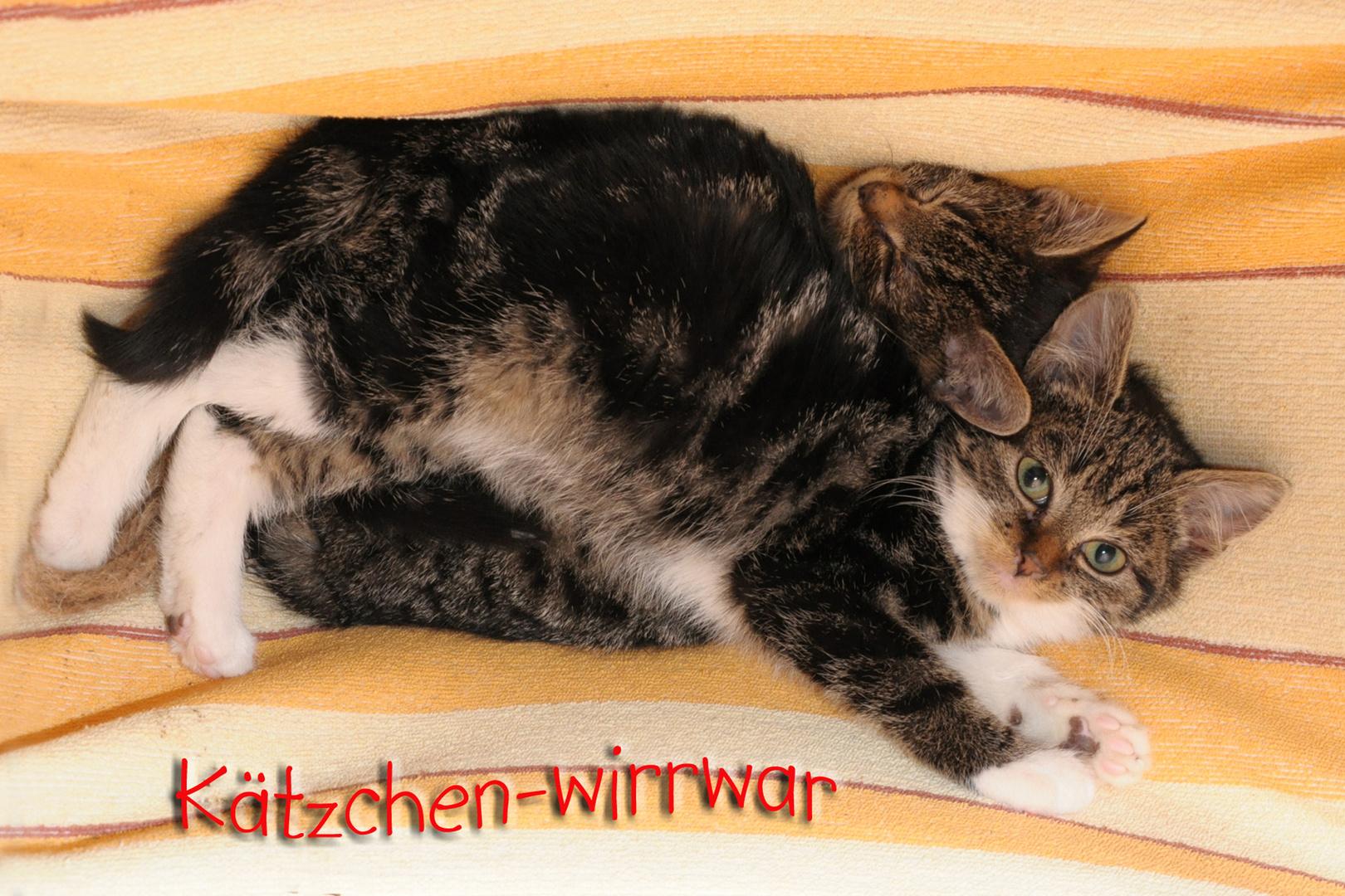 Kätzchen-Wirr-war