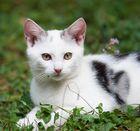 Kätzchen2