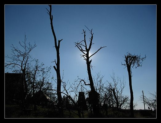"kahle bäume auf dem ""kahleberg"""