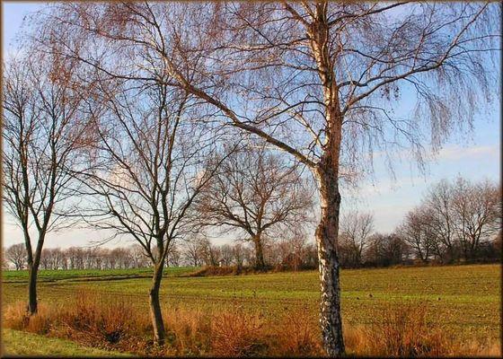 Kahle Bäume, kahle Felder