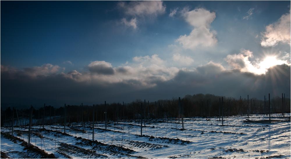 Kahlenberg in Winterstimmung