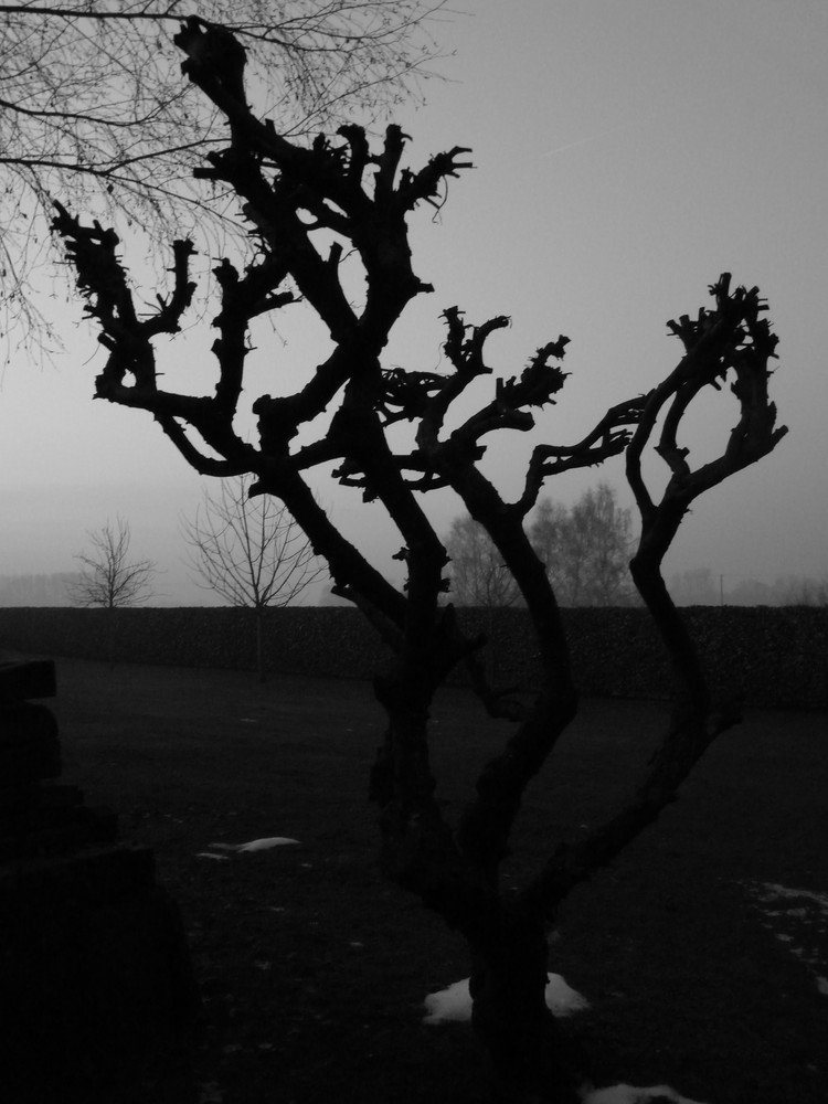 kahler Baum.